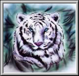 Exotic white tiger