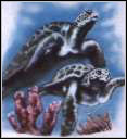 Wildlife Turtles